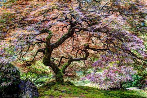 portland oregon japanese garden tree of life tomas w