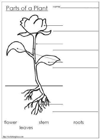 Label The Parts Of A Plant Green Plant Reproduction Pinterest Plants Plant Label Template
