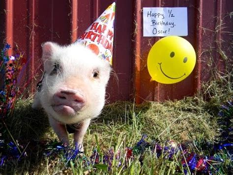Happy Birthday Pictures With Pigs