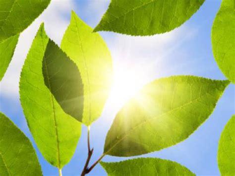 Pflanzen Ohne Licht by Wieso Wachsen Pflanzen Ohne Licht Nicht