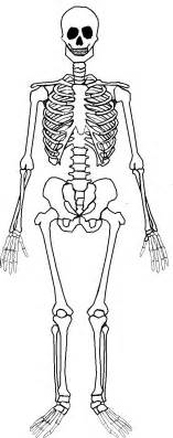 How To Make A Human Skeleton Out Of Paper - 25 best ideas about skeleton parts on
