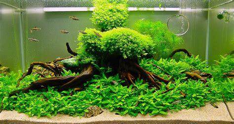 manfaat tanaman air aquarium ikan hiasku