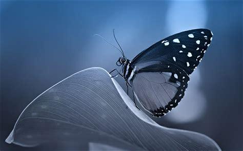 imagenes asombrosas facebook fotos asombrosas de mariposa spanish china org cn 中国最权威的