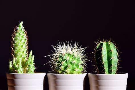 picture spike leaf nature sharp photo studio flora cactus plant