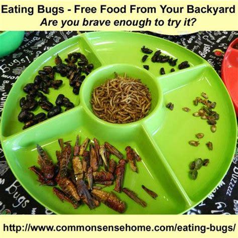 bug free backyard eating bugs free food from your backyard judges