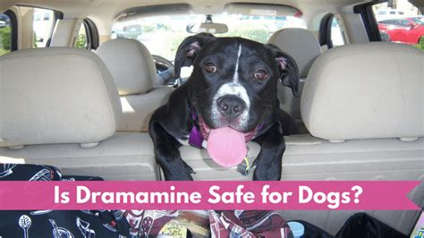 can you give a dramamine is dramamine safe for dogs smart owners