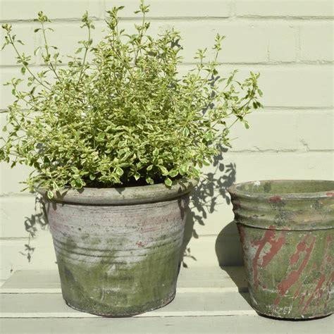moss effect plant pots  audenza notonthehighstreetcom