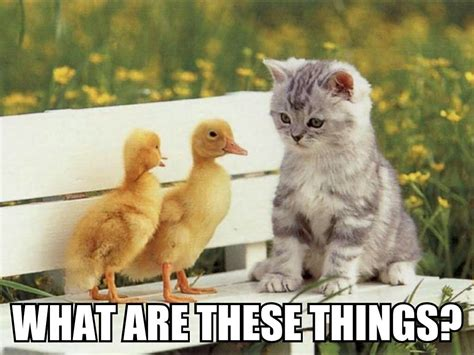 Funny Duck Meme - 30 most funny duck meme pictures and images