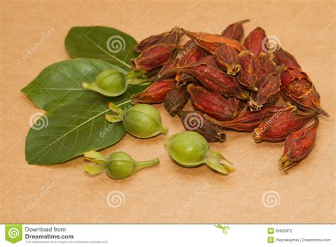 Gardenia Fruit Gardenia Fruit Herbal Medicine Stock Photography