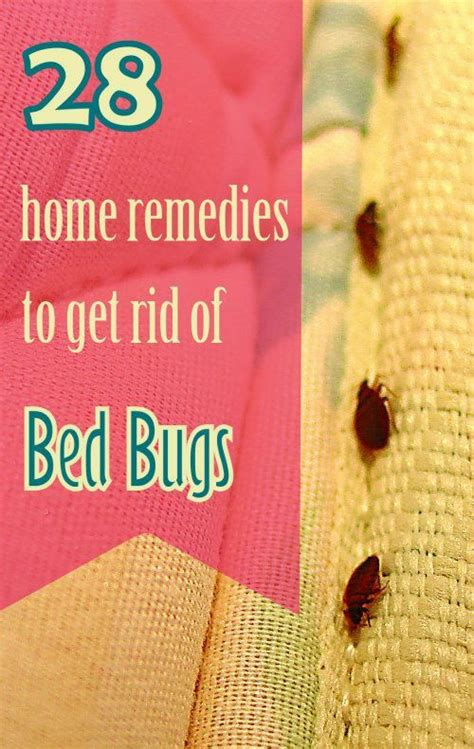 bed bugs  expensive  treat   home remedies  bed bugs    easily save