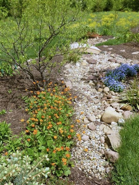 stream bed 770 best dry riverbed ideas images on pinterest
