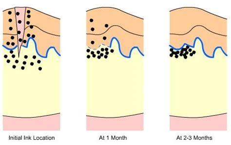 tattoo healing process length tattoos online training