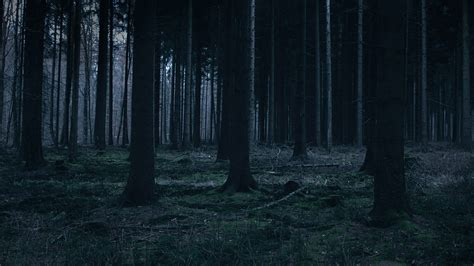 mj forest dark night trees nature papersco