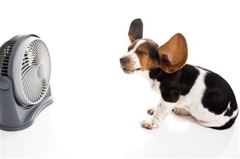 how are dogs in heat for preventing heat stroke dogsquad