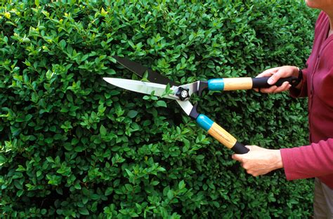 Gardenia Pruning When To Prune Your Garden Pruning Calendar For Plants