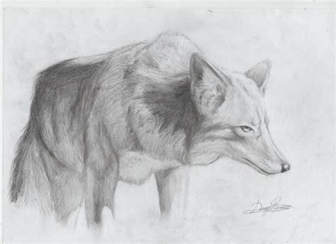 dibujar animales salvajes a lapiz imagui dibujos de animales para dibujar a lapiz imagui