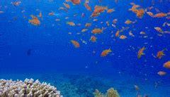 underwater wallpaper gif reef aquarium gifs search find make share gfycat gifs