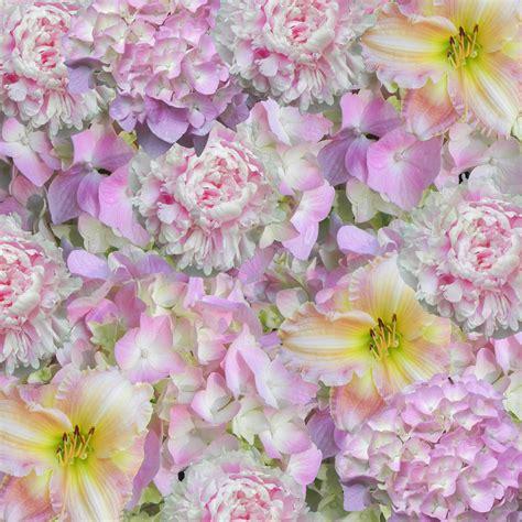wallpaper daun pink gambar daun bunga pola warna gambar pohon bermain daun