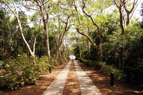 tropical botanical garden miami fairchild tropical botanical gardens miami visions of