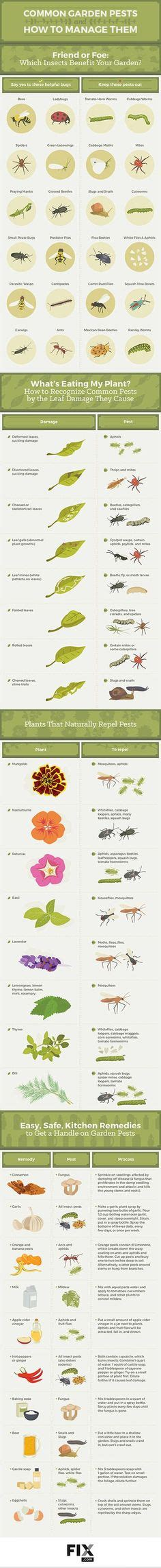 gardening cheat sheets the garden glove 1000 images about green thumb on pinterest garden paths