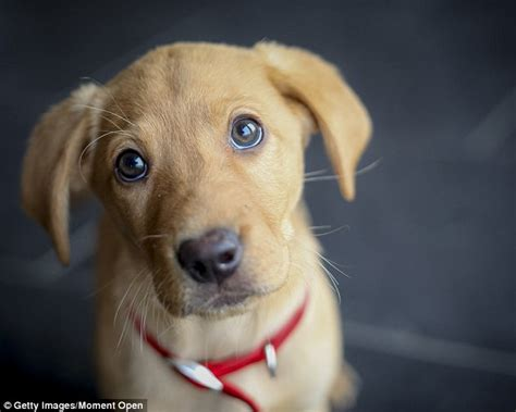 leptospirosis vaccine for dogs thousands of dogs dying or suffering severe reactions after being vaccinated daily