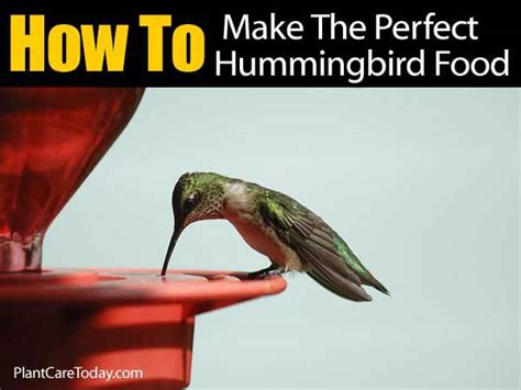 homemade hummingbird food microwave crazy homemade