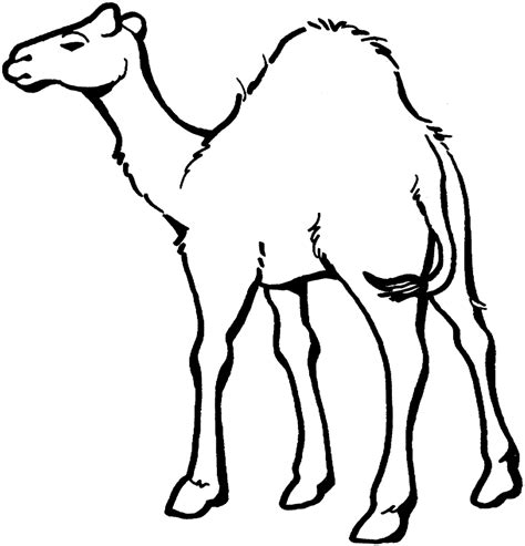 Free Coloring Pages Of Zoo Animal Preschool Camel Coloring Page