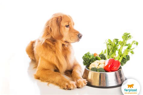 are apples bad for dogs what foods are bad for dogs all our unwitting mistakes