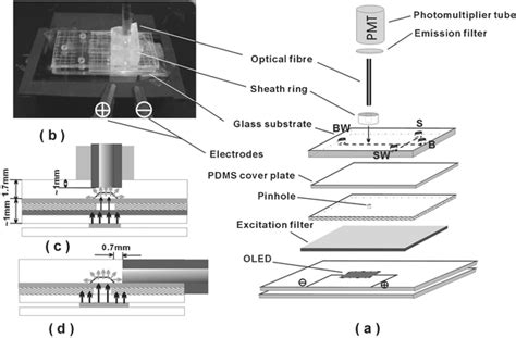 organic light emitting diodes devices and applications microfluidic organic light emitting diode 28 images building oleds from the ground up for