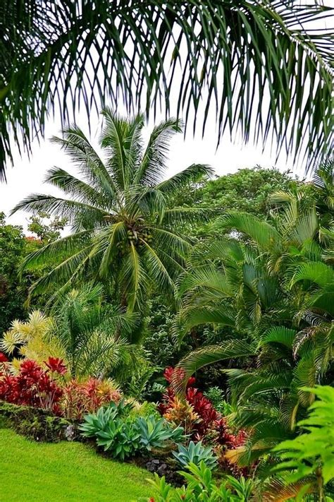 palm trees for backyard best 25 tropical patio ideas on pinterest tropical