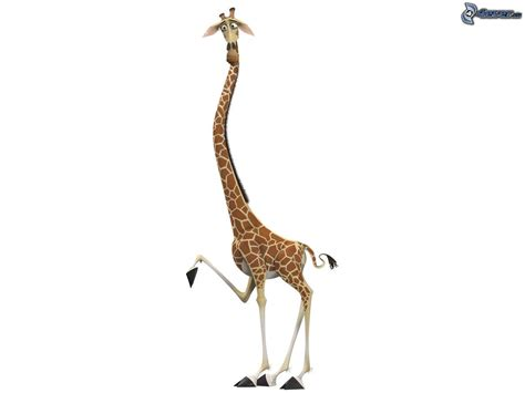 imagenes de jirafas de madagascar jirafa de madagascar
