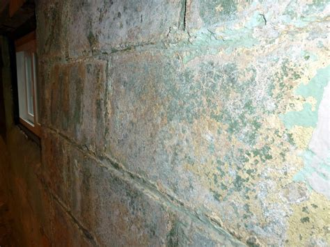 buying a house with mold in basement how to prevent and eliminate basement mold moldmanusa