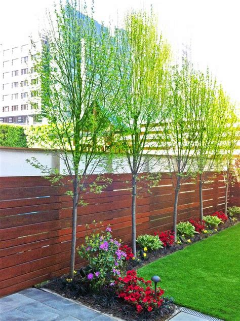 trees for small backyards meer privacy in de tuin