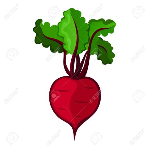 beet color beet clipart single vegetable pencil and in color beet