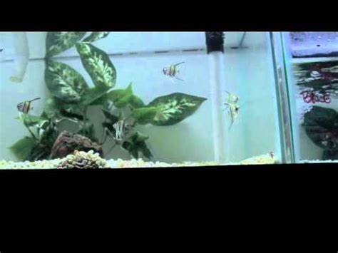 aquascape online aquascapeonline store walkthrough youtube