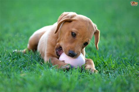 images of dogs playful breeds of dogs pets4homes