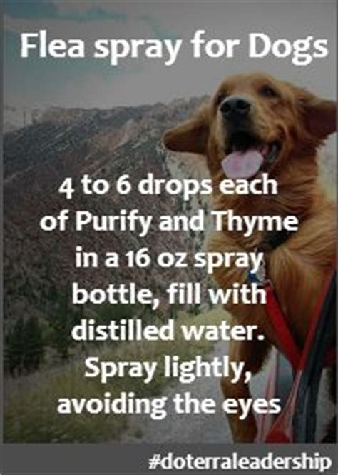 essential oils for fleas on dogs fleas collars and care on
