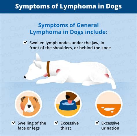 symptoms of lymphoma in dogs lymphoma in dogs canna pet