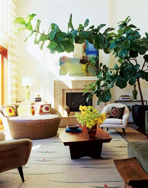 biggest house plants 34 interior designs with indoor trees messagenote