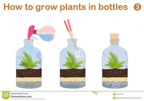 how to grow plants in bottles stock vector illustration