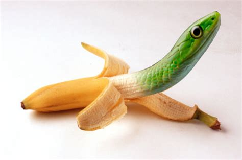 imagenes de animales fusionados animales photoshop taringa