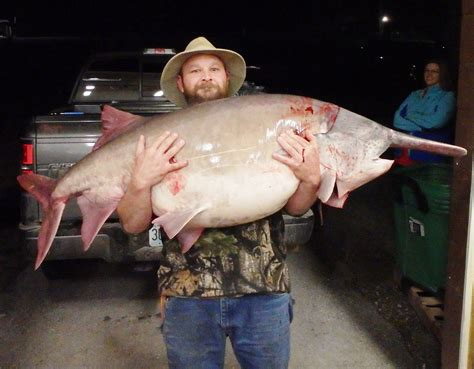 Records Missouri Richwoods Angler Catches State Record Paddlefish Missouri Department Of Conservation