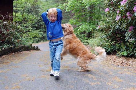 imagenes de niños jugando con un perro ideas para que el ni 241 o y el perro se diviertan juntos