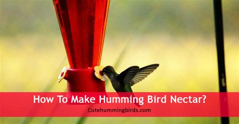 how to make humming bird nectar cute humming birds