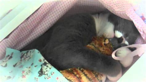 Cat In Baby Crib by Cat Hugs Kitten In Baby Crib