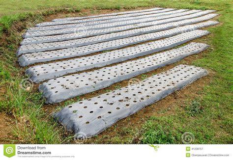 how to prepare soil for a vegetable garden prepare soil of vegetables stock photo image 41238757