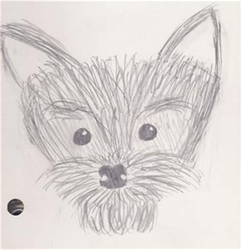 yorkie sketch sketch of a yorkie by herbertsgirl on deviantart