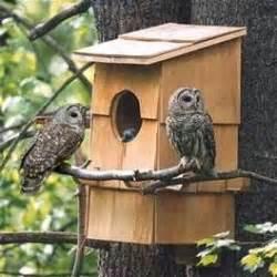 owl homes best 20 owl house ideas on owl box rustic