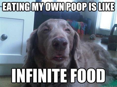 Dog Poop Meme - dog memes i eat poop