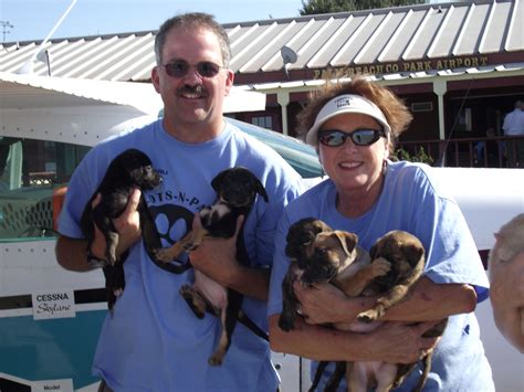 a second chance puppies and kittens rescue pilots n paws